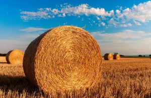 straw-bales